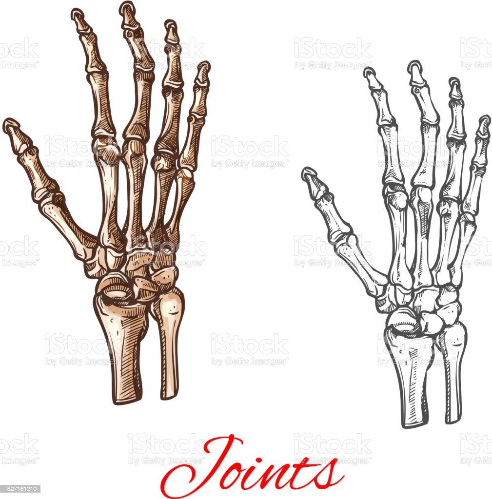 Vector Sketch Icon Of Human Hand Bones Or Joints Stock Vector Art ...