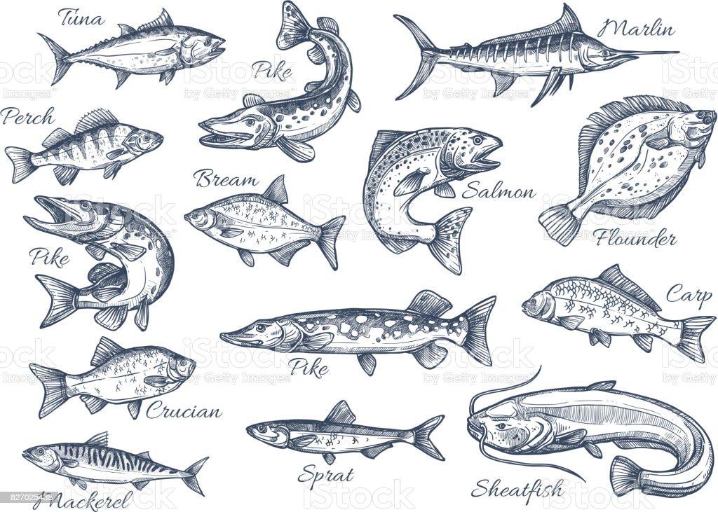 Vector sketch icônes de poissons de rivière ou de mer - Illustration vectorielle