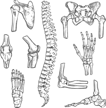 Vector sketch icons of human body bones and joints