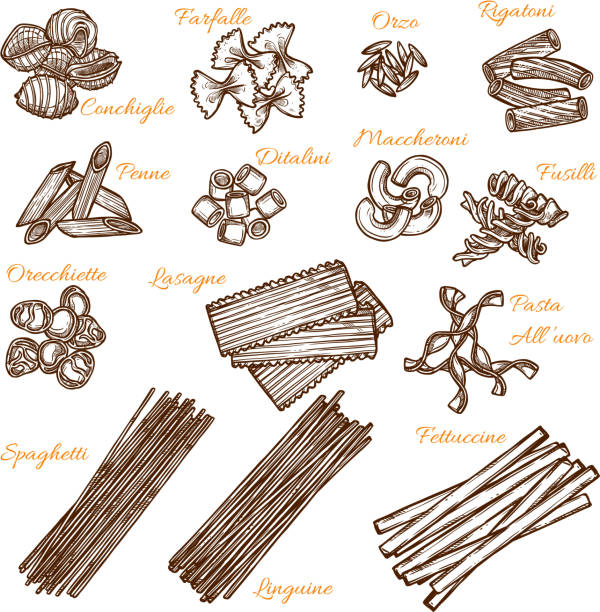 Vector sketch icons of Italian pasta sorts Italian pasta sorts sketch icons. Vector isolated set of conchiglie, farfalle or orzo macaroni, durum rigatone or penne and ditalini, hand crafted maccheroni or fusilli and orecchiette with lasagne canelones stock illustrations