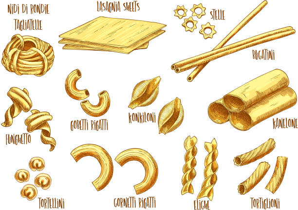 Vector sketch icons of Italian pasta variety Italian pasta vector sketch set of Italian nidi di rondi or tagliatelle, lasagna sheets and stelle, bucatini and funghetto sort, gobetti rigatti or konkiloni and kanelone or tortellini canelones stock illustrations