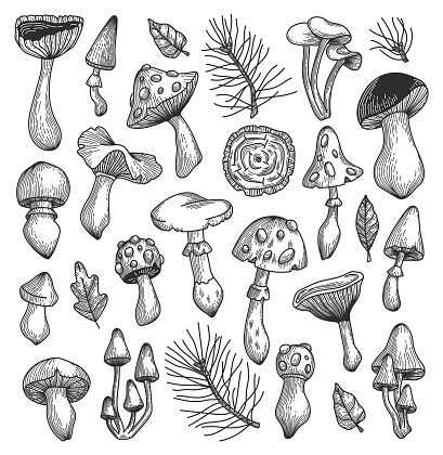 Vector sketch mushrooms collection.