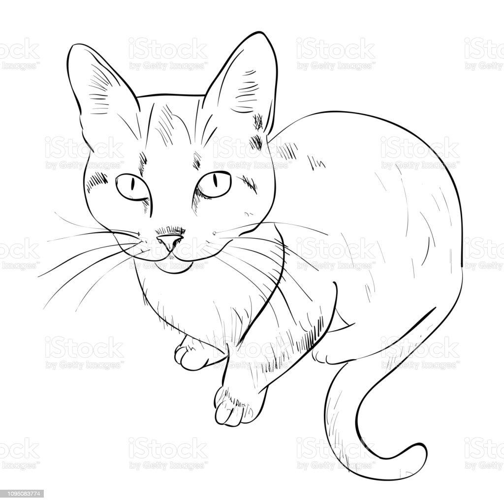 Vector sketch of cat. vector art illustration
