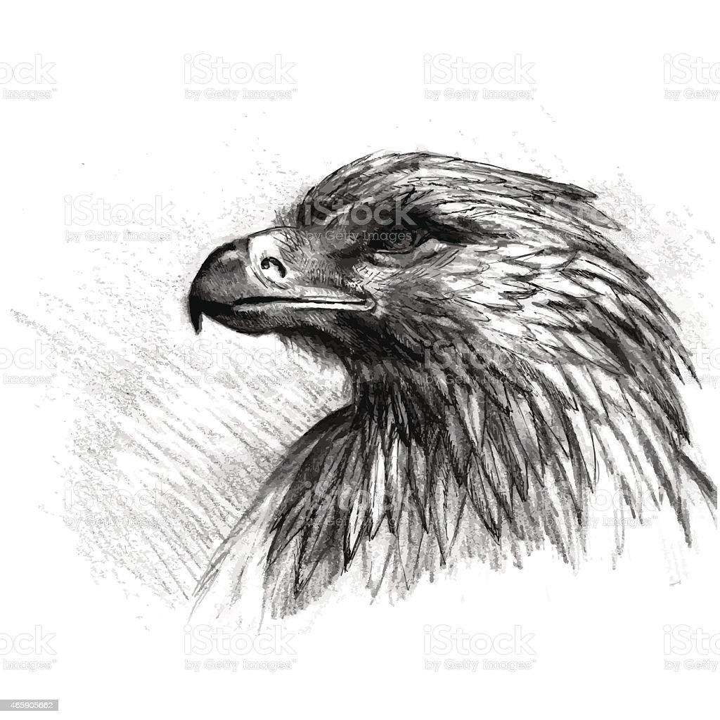 Vector sketch of eagle vector art illustration