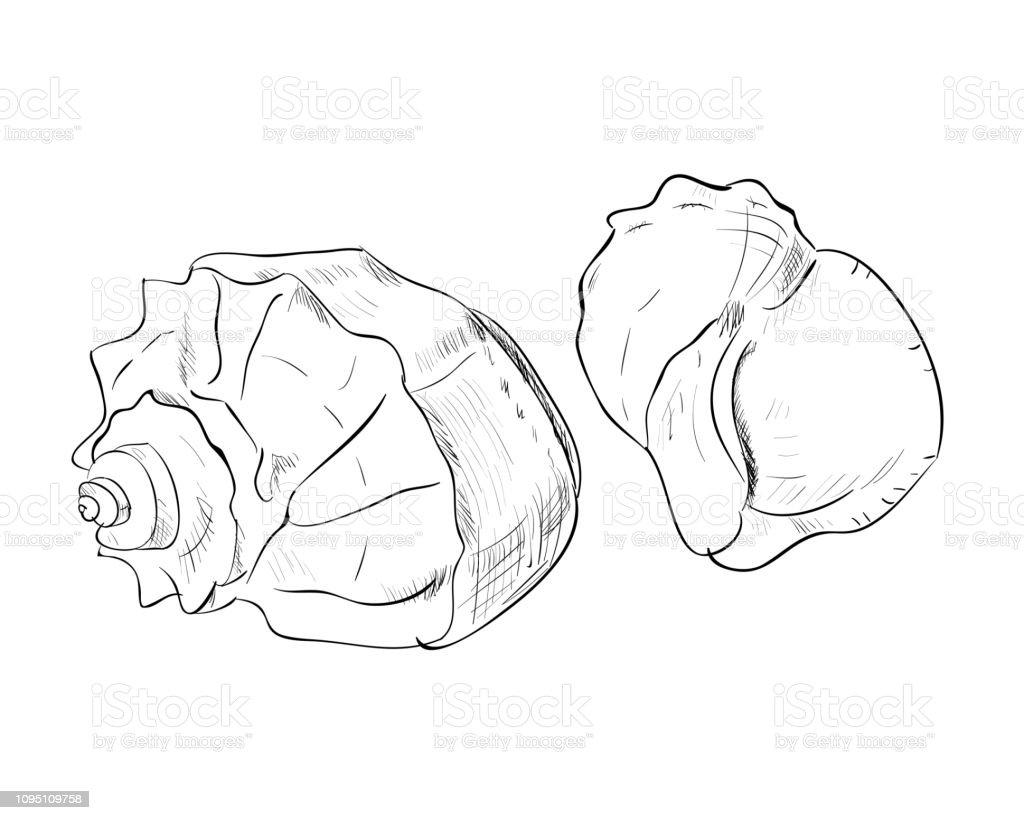 Vector sketch of shells vector art illustration