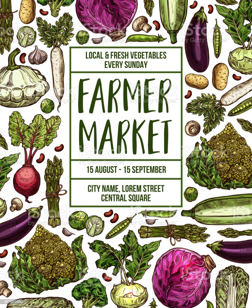 Vector sketch poster for vegetables farm market vector art illustration