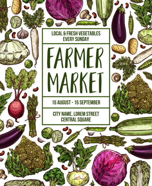 Vector sketch poster for vegetables farm market Vegetables farmer market sketch poster. Vector design template of fresh veggies and natural farm organic radish or cauliflower and broccoli cabbage, zucchini squash or cucumber and carrot or tomato farmer's market stock illustrations