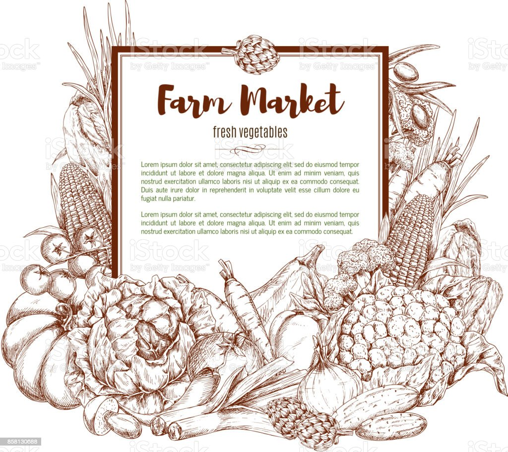Vector sketch poster of farm vegetables vector art illustration