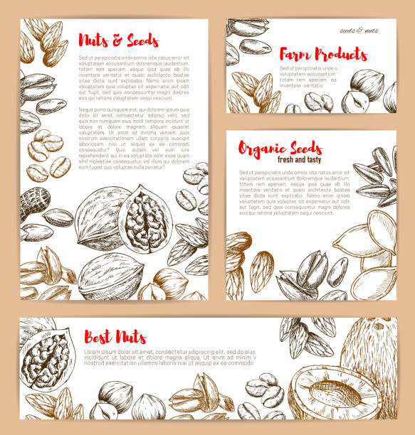 vector sketch posters of nuts and fruit seeds - plant pod stock illustrations