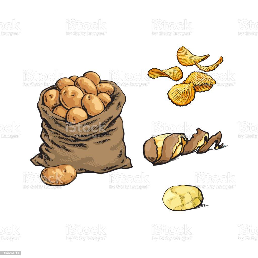 vector sketch raw potato bag, chips, peel set vector art illustration