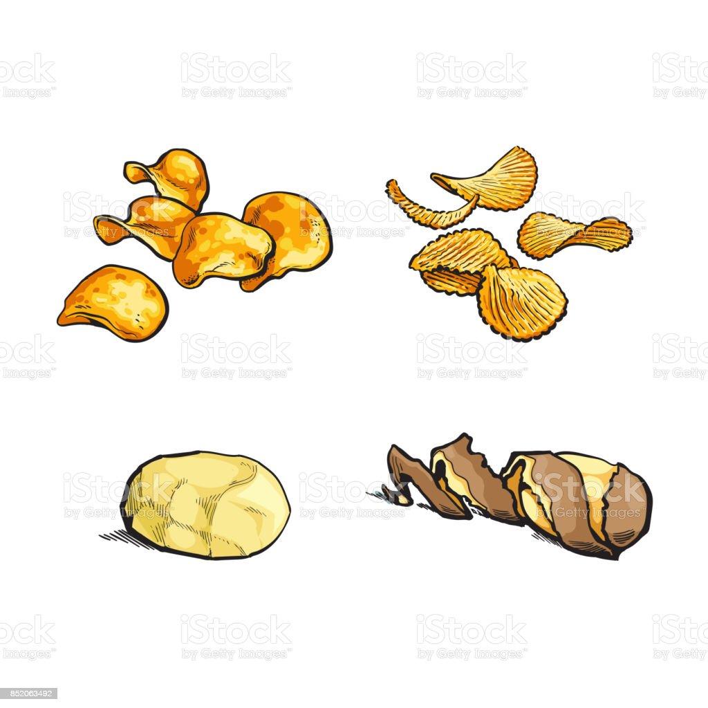 vector sketch raw potato, chips set vector art illustration