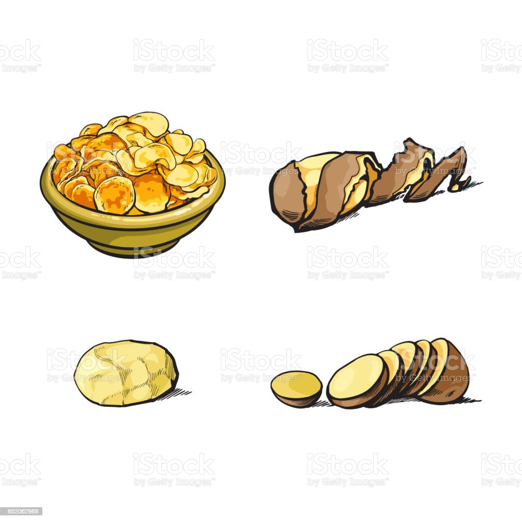 vector sketch raw potato with peel, slices chips vector art illustration