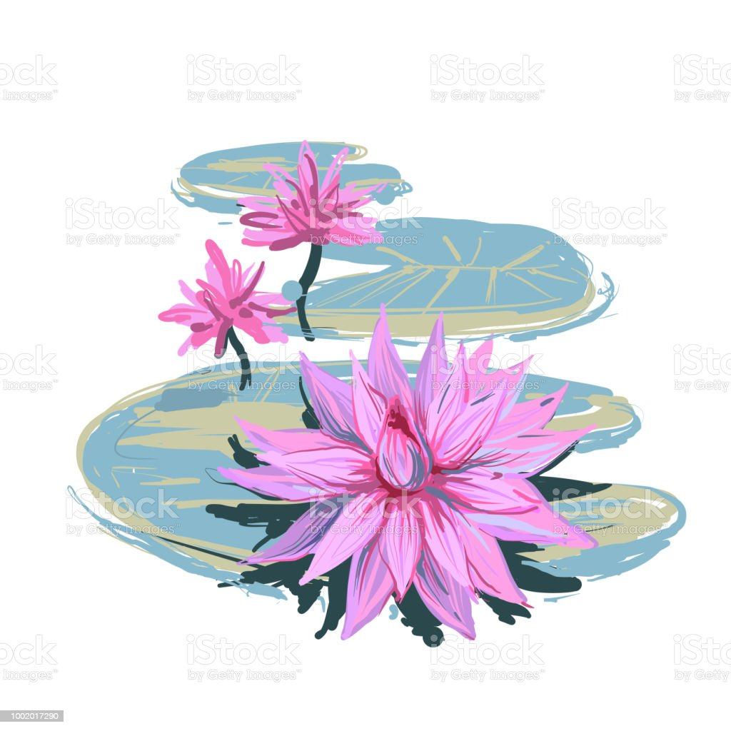Vector Sketch Realistic Illustration Of Lotus Flowers And Leaves
