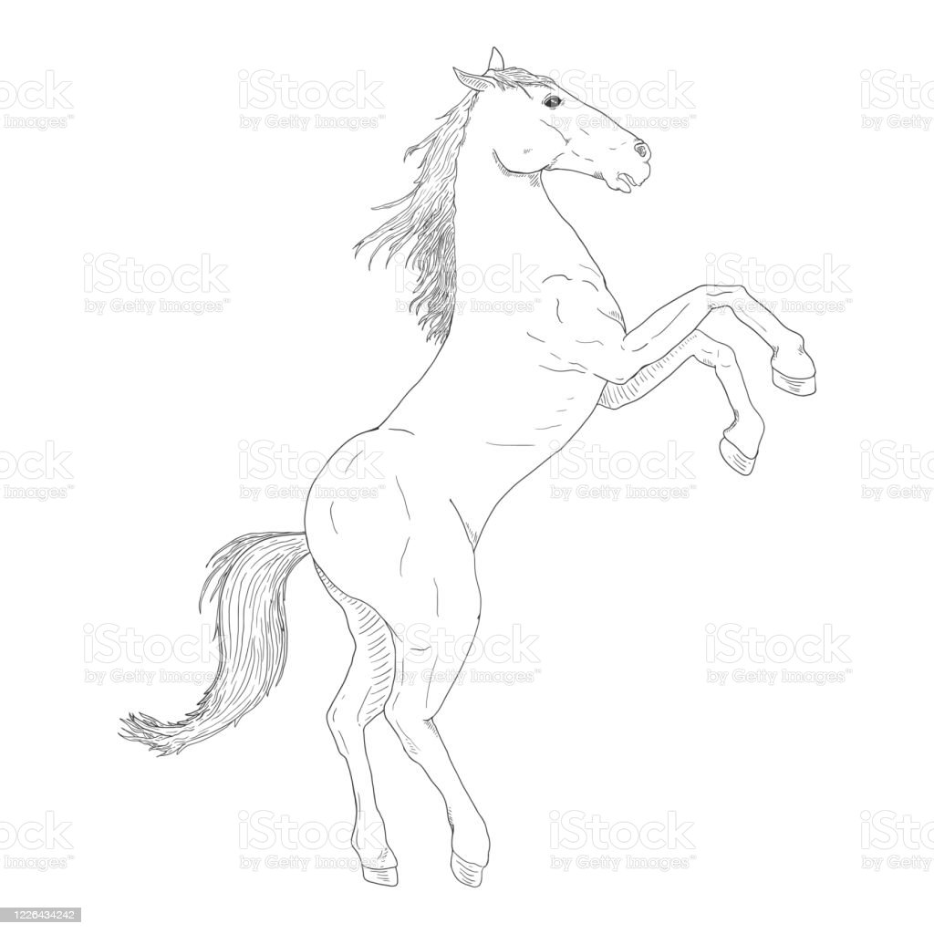 Vector Sketch Rearing Horse Stock Illustration Download Image Now Istock