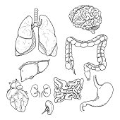Vector Sketch Set of Anatomical Human Organs. Medicine Illustration.