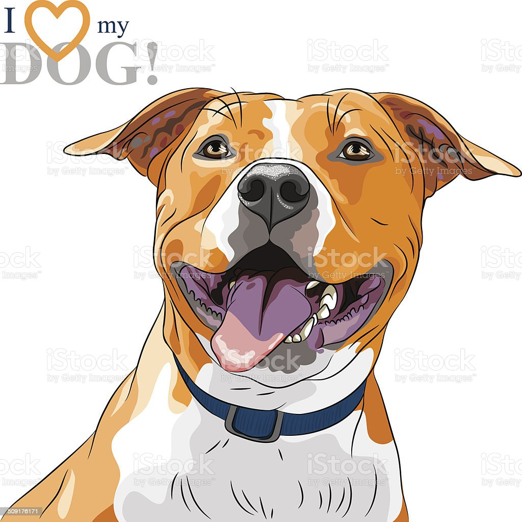 vector sketch smiling dog American Staffordshire Terrier breed vector art illustration