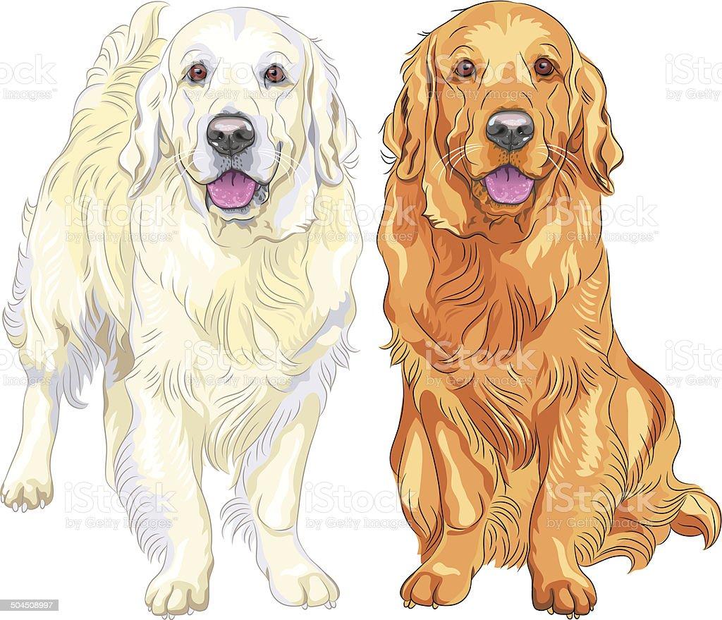 Vector Sketch Two Dog Breed Golden Retriever Stock Vector Art & More ...