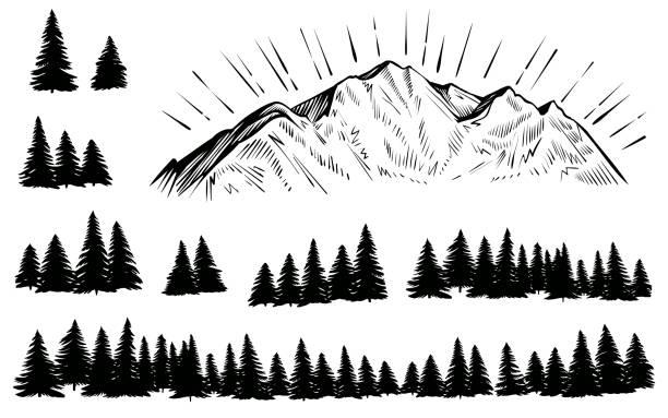 bildbanksillustrationer, clip art samt tecknat material och ikoner med vektorskisserade berg med skogssilhuett med solstrålar. - forest