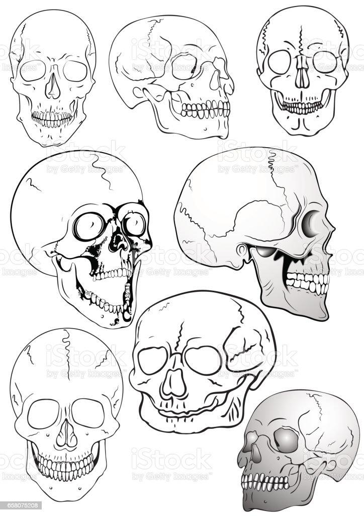 Vector skulls - warning sign royalty-free vector skulls warning sign stock vector art & more images of anatomy