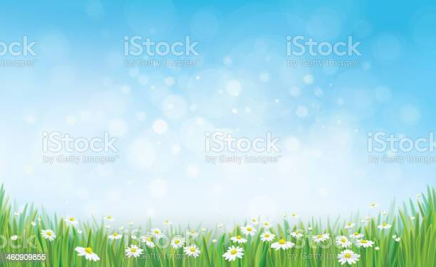 Vector sky background with grass and chamomiles vector id460909855?b=1&k=6&m=460909855&s=612x612&h=kqbogrmimaduaxygqct8henchnqg pt90bedxy5cvzg=