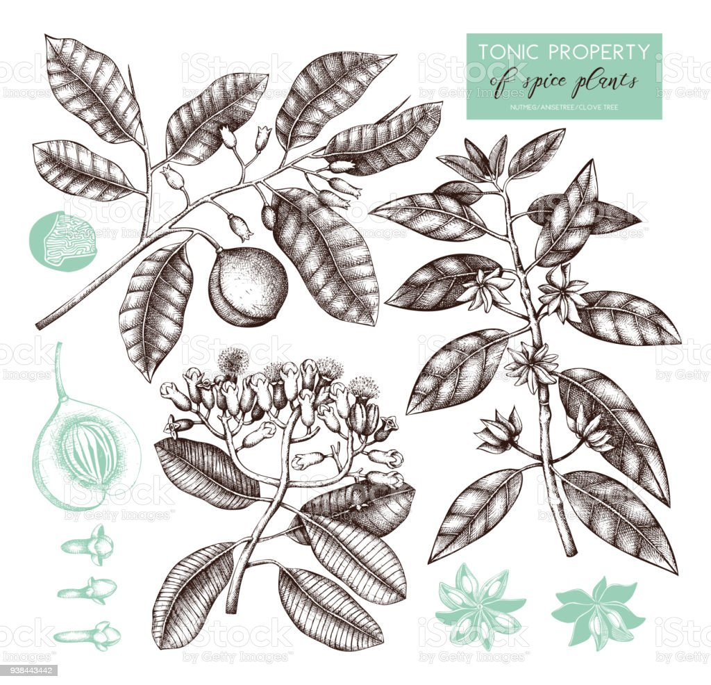 Vector spice plants collection vector art illustration