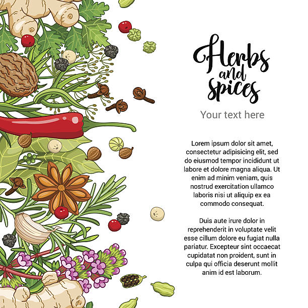 vector spicy card design with spices and herbs - kräutermischung stock-grafiken, -clipart, -cartoons und -symbole