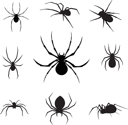 vector spiders - Illustration