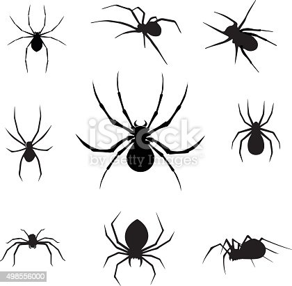 vector illustration of isolated spiders.