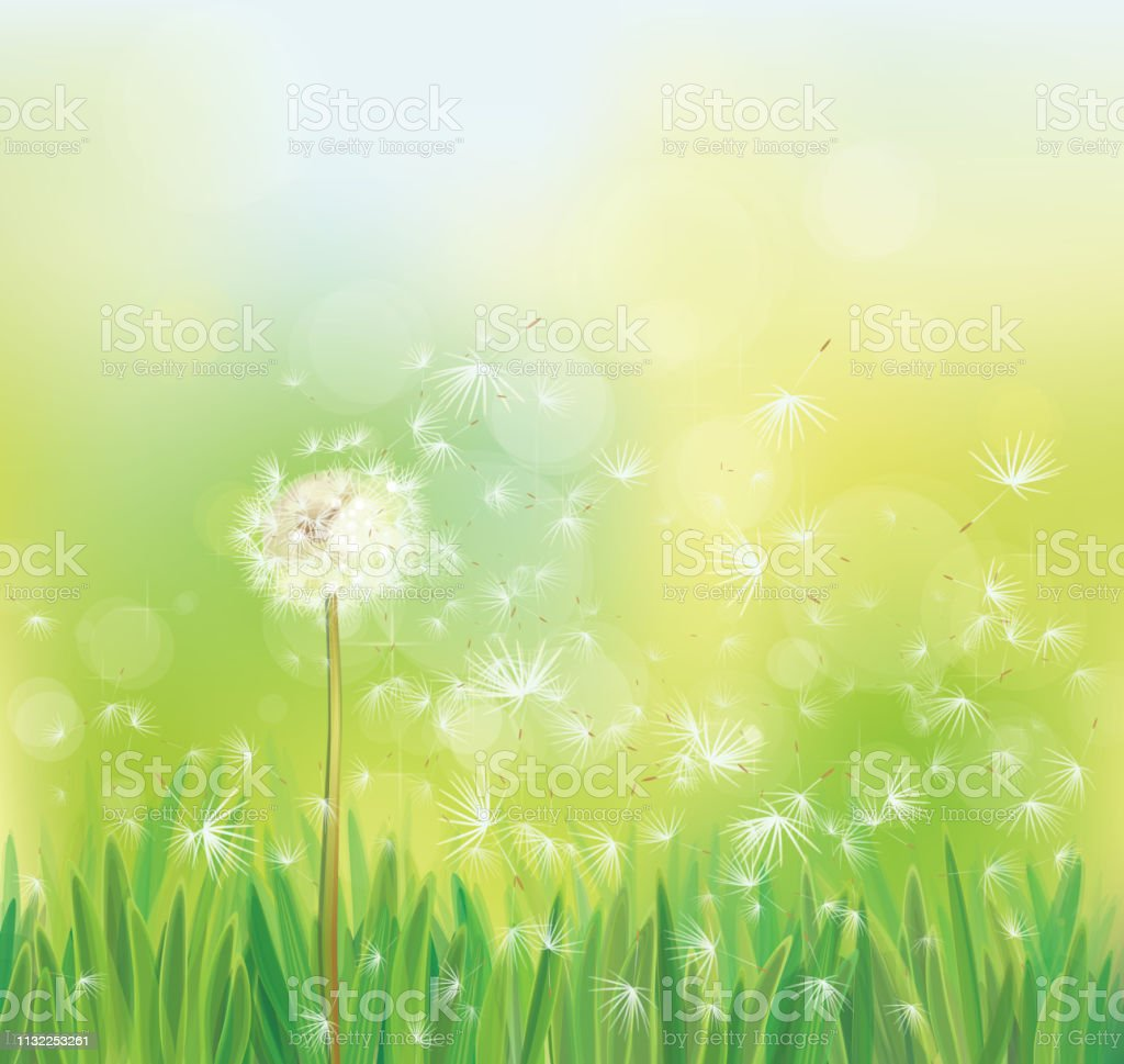 d135867c17112 Vector Spring Background With White Dandelion Stock Vector Art ...
