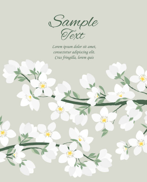 Vector spring blossom Vector illustration of decorative branches with flowers. Spring white blossom apple blossom stock illustrations