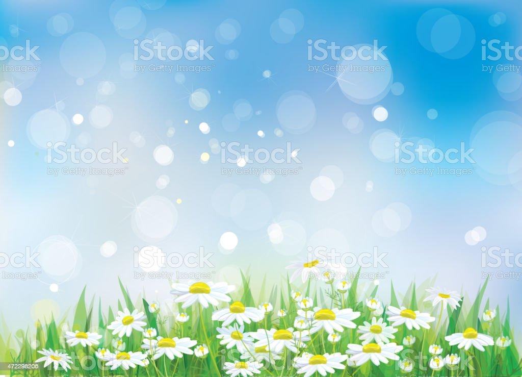 Vector spring landscape, beautiful chamomiles flowers. vector art illustration