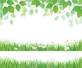 Vector spring leaves, grass and daisy flowers  borders isolated.