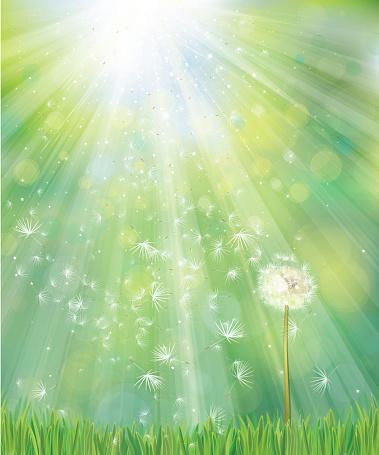 Vector spring white dandelion.
