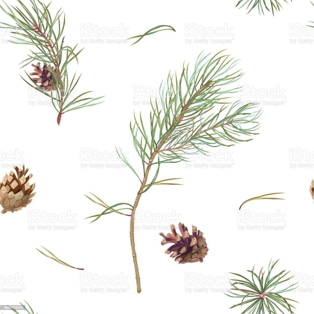 Vector square seamless pattern with green pine branches and brown cones, needles on white background, illustration for fabric, wallpaper, wrapping, vintage vector art illustration