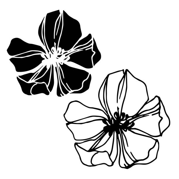 ilustrações de stock, clip art, desenhos animados e ícones de vector strawberry flower. black and white engraved ink art. isolated strawberry illustration element. - natureza close up