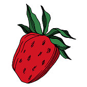 Vector strawberry fresh berry healthy food. Black and white engraved ink art. Isolated strawberry illustration element on white background.