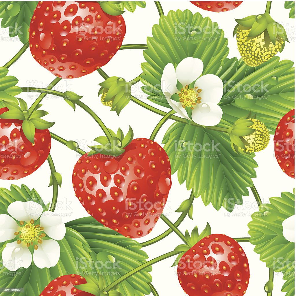 Vector strawberry seamless pattern isolated on white background royalty-free stock vector art