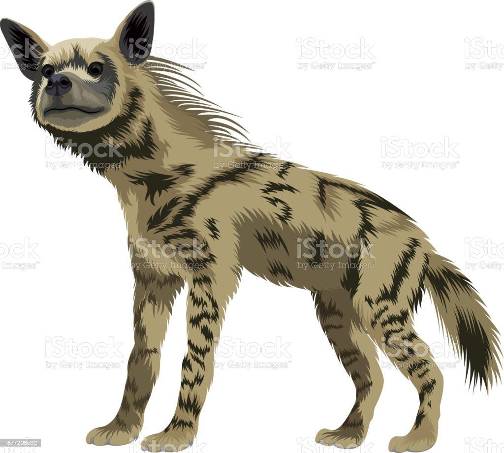 vector striped hyena vector art illustration