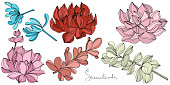 Vector Succulent floral botanical flower. Wild spring leaf wildflower isolated. Engraved ink art. Isolated succulents illustration element on white background.