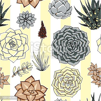 Vector succulents seamless pattern. Succulent ornament.  Natural composition. Colored succulents and cactus floral print. Hand drawn art work.