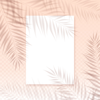 Vector summer background with transparent overlay palm leaves shadow and paper blank on pink wall. Realistic soft light mockup illustration