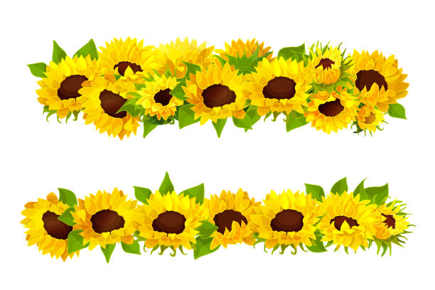 Yellow Sunflowers Border Cartoon Illustrations, Royalty ...