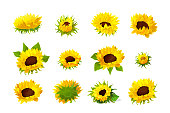 vector sunflower seeds head flower icons set
