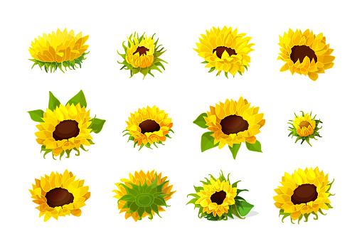 Vector Sunflower Seeds Head Flower Set Stock Illustration ...