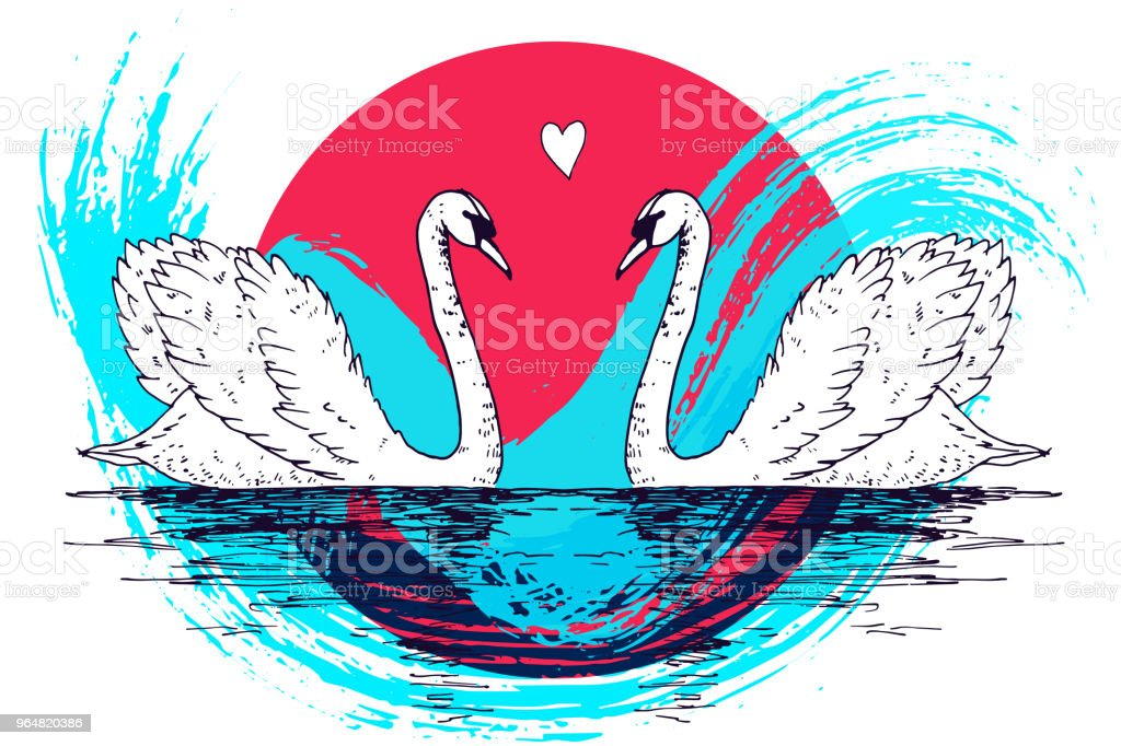 Vector swan couple illustration with watercolor paint splash. Swimming elegant swan birds in love, beautiful wild nature sketch. Royal swan ink outline illustration, hand drawn animal. royalty-free vector swan couple illustration with watercolor paint splash swimming elegant swan birds in love beautiful wild nature sketch royal swan ink outline illustration hand drawn animal stock vector art & more images of abstract