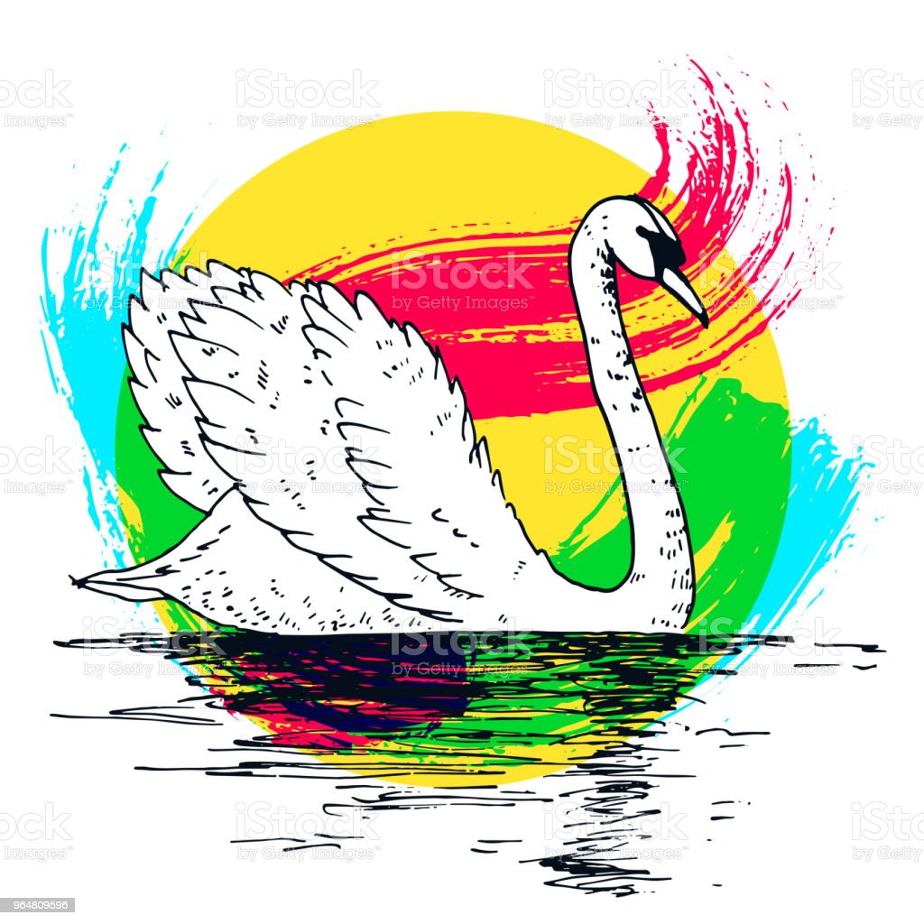 Vector swan illustration with reflection and abstract watercolor paint splash. Swimming elegant swan bird, beautiful wild nature sketch. Royal swan ink outline illustration, hand drawn animal. royalty-free vector swan illustration with reflection and abstract watercolor paint splash swimming elegant swan bird beautiful wild nature sketch royal swan ink outline illustration hand drawn animal stock vector art & more images of abstract
