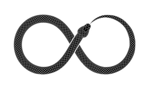 vector tattoo design of snake bites it's tail in the form of a sign of infinity. - snake stock illustrations, clip art, cartoons, & icons