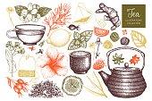 Vector tea sketch collection