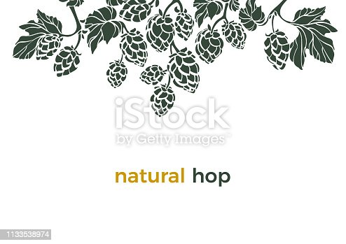 Vector nature template Natural hop Shape frame, border Bio beverage Art banner on white background Herbal cone, leaves, branch Simple design for beer print, pub Organic food Botany set Organic pattern