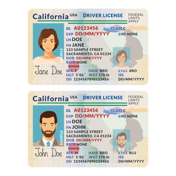 Vector template of sample driver license plastic card for USA California Vector template of sample driver license plastic card for USA California id card stock illustrations